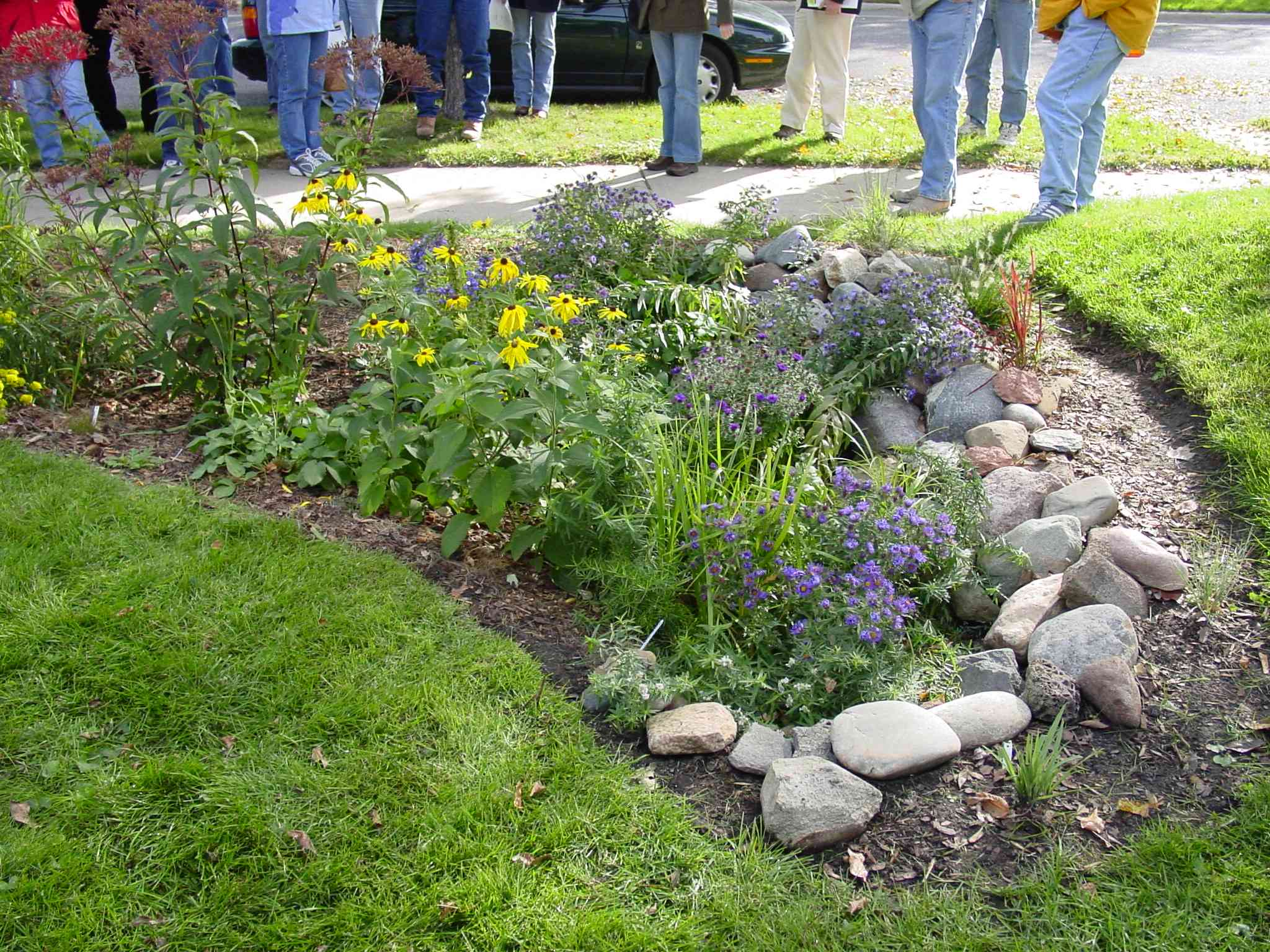 what s up with rain gardens
