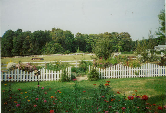 chain link  deer net fence - GardenWeb - The Internet's Garden