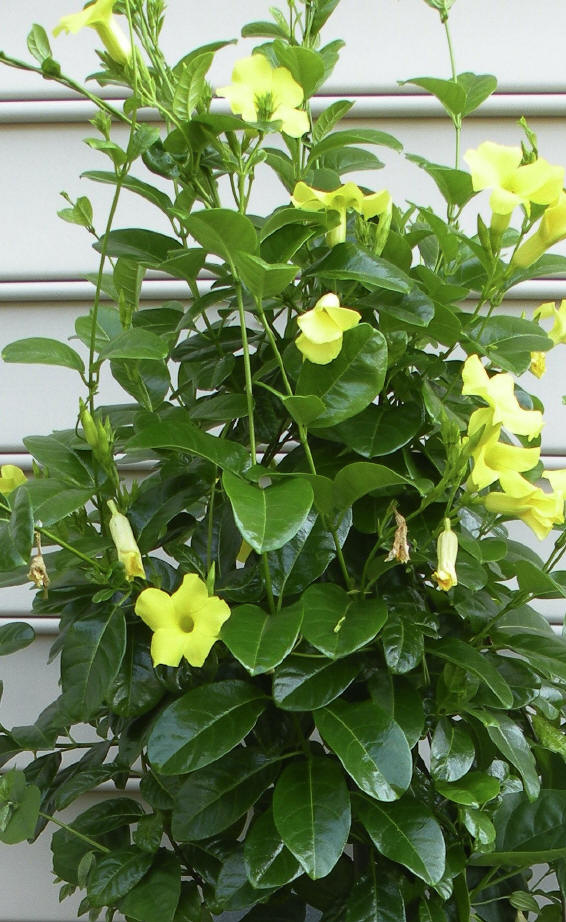 Top ten container plants for record breaking hot summer mightylinksfo Image collections